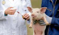 Svenska råd ska minska användning av antibiotika