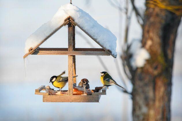 Ett sant vinternöje är att se småfåglarna äta sig mätta vid fågelbordet.