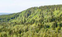 Pengar till skötsel av skyddad skog satsas på inventering