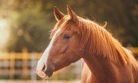 Ny kurs ska ge bättre hästvälfärd