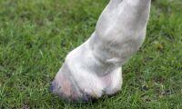 Misstänkt djurskyddsbrott när hästar avlivades