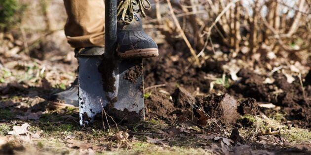 Guider och tips om trädgård och odling