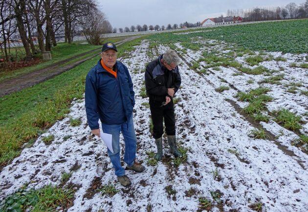 Anders Rasmusson och Uno Törringer, lantbrukare i Skåne, har drabbats av efterverkningar av ogräsmedel i höstrapsen.