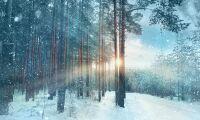 Revansch för Norrlands skogspriser