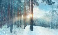 Skogsmarkspriserna stiger mest i norr