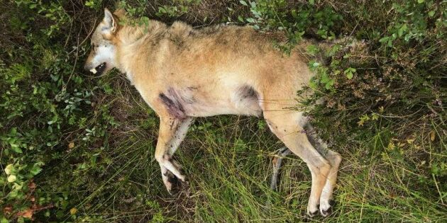 Riksåklagaren överklagar jaktbrott till HD