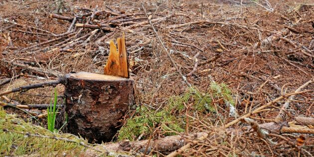 Oklart om klimatkrav på svensk skog