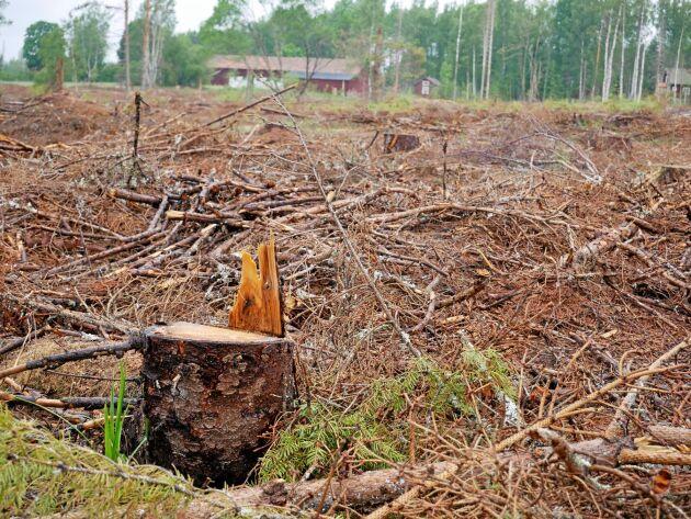 Rekommendationerna om var Sveriges referensnivå för avverkning ska ligga har kommit, men de är svårtolkade.