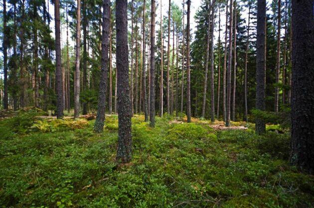 3a098912 Det gör att det genomsnittliga priset på skogsmark hamnade på 389 kronor  per skogskubikmeter. Det är ...