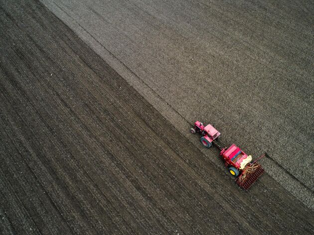 Bristen på utsäde att det blir avsevärt mindre åkerböna och ärtor i vår.