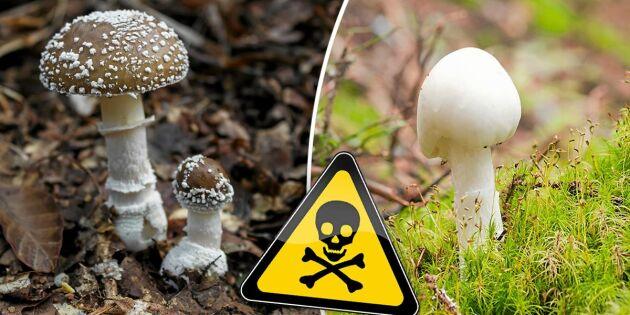 Så vet du om du har blivit svampförgiftad