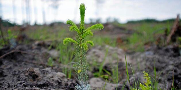 Tre gånger så bra tillväxt med rätt plantor