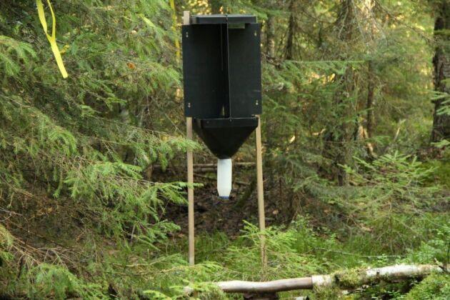 En feromonfälla för bastborrar ute i skog under fältförsök.