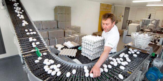 "Äggproducenter: ""Vi har lite panik, milt uttryckt"""