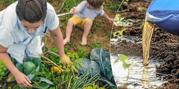 Ge dina odlingar en kickstart – allt om gödsel och kompost
