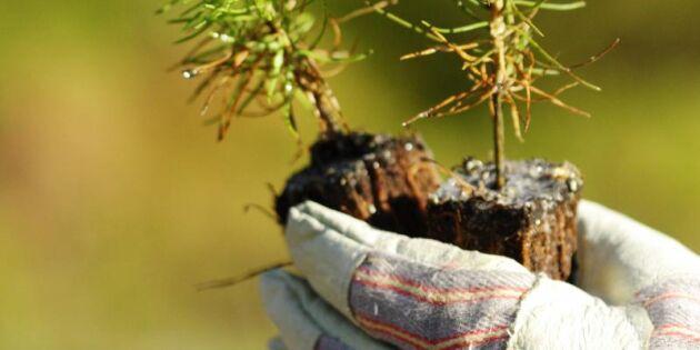 """""""Skogsarbetare måste få dispens för inreseförbudet"""""""