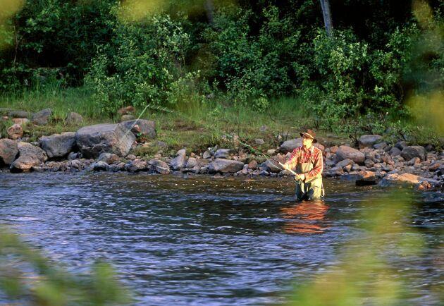 I två populära älvar, Vindelälven och Byskeälven i Västerbotten, råder det fiskeförbud.