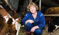 Korna blir konst på Ölands skördefest