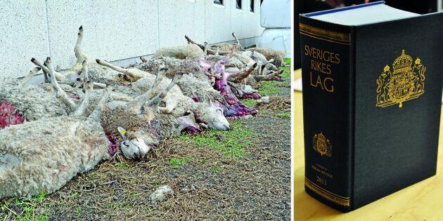 Avslag för LRF om skyddsjakt på varg