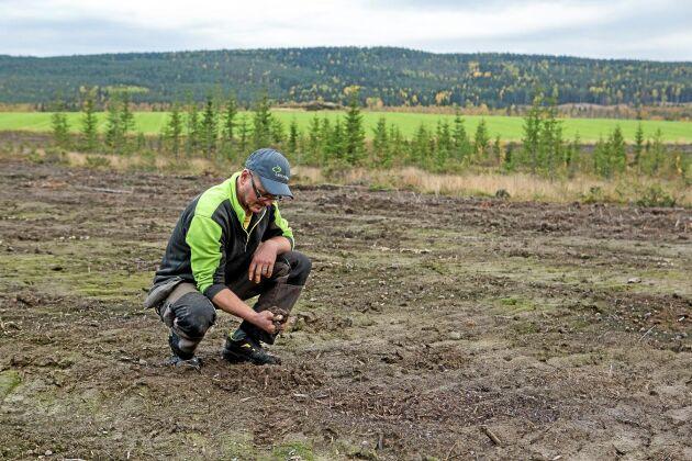 Det tar 3–4 år innan nybruten mark ger bra skörd. 20 hektar ny vall har brutits av bröderna i den egna skogen nära gården i bakgrunden. Ytterligare 13 hektar ny mark håller på att brytas.