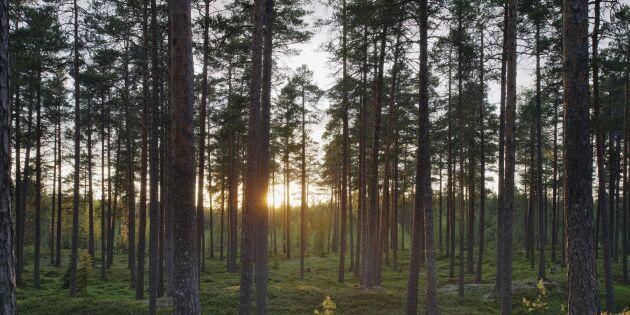 Mer pengar till frivilligt skydd i skogen