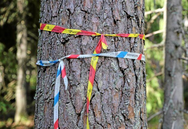 Konfliktfrågorna i skogen måste lösas i första hand vid arbetet med det nationella skogsprogrammet, anser företrädare för miljöorganisationerna i ett öppet brev till landsbygdsminister Jennie Nilsson.