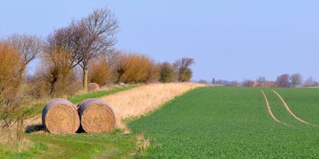 Tuffa villkor för nystartare i jordbruket