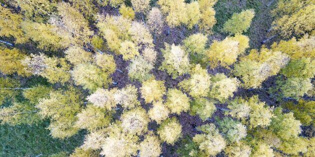 Fotosyntesen tog stryk i sommarvärmen