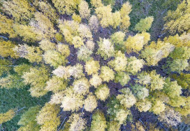Genom att mäta hur koldioxid avges från fotosyntesen hoppas forskarna i nätverket ICOS kunna skapa bättre ekosystemmodeller.
