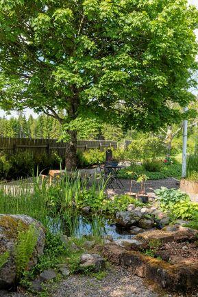 Näckrosdammen gör sig fint mot staketet byggt av gamla hässjestörar, som Åke och Eva gått på jakt efter i traktens lador.
