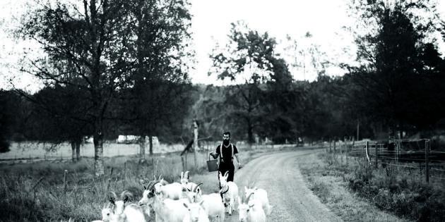 Livet svängde snabbt – nu är Lina och Oscar köttbönder