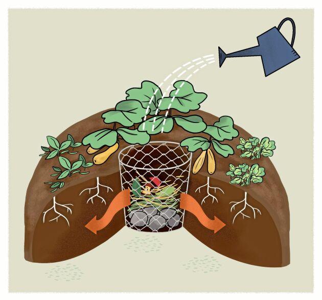Upphöjd odling med kompost i mitten. Bygg den med kanter av sten eller trä eller bara som en jordkulle. Sätt en spaljé i bakkant så blir klimatet ännu bättre.