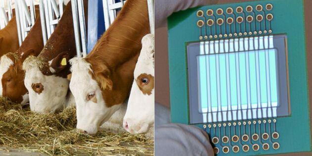 Ny snabb givare testar mjölkkvaliteten