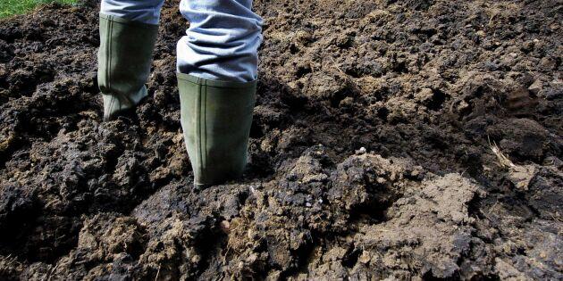 Finländska lantbrukare ratar avloppsslammet