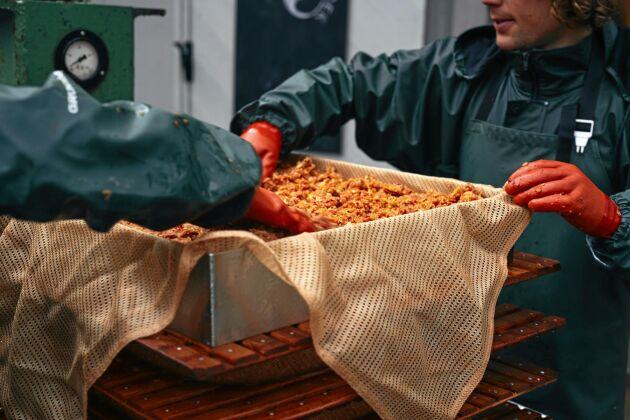 Allt börjar med råvaran menar Klara Peterson och Axel Bäck. Favoriterna är ädla svenska äppelsorter och vildaplar.