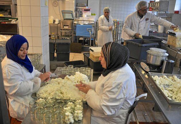 Noor Ismael, Vidad Ali, Samar Abuaisheh och Mohamad Godeh producerar prisbelönade ostar i Malmö.