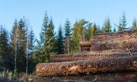 Skogen står för tunga investeringar