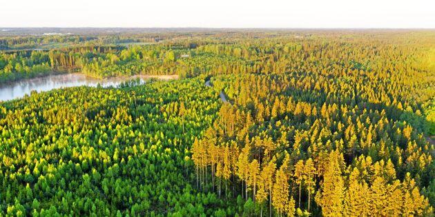 Bolag med skog i tre län till salu