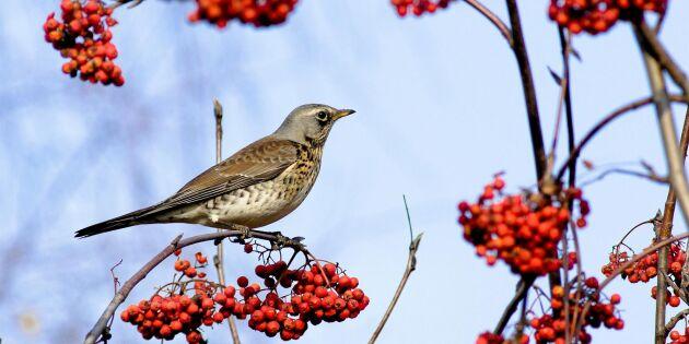 11 delikatesser att spara nu – och mata fåglarna med i vinter!