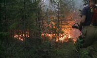MSB: Plantera mer lövskog för att minska brandrisk