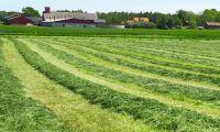 Säffle vill hyra ut jordbruksmark igen
