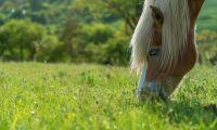 Lät hästar beta på skyddat område – polisanmäls