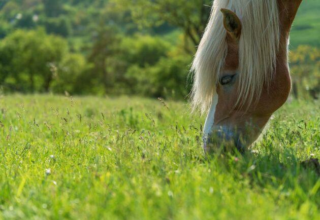 Enligt länsstyrelsen har området inte kunnat slås i år eller 2018 på grund av att hästar gått på bete på området. Arkivbild.
