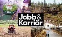 Premiär för jobb och karriär