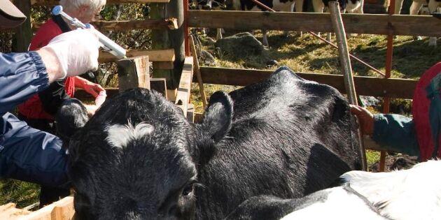 Kartläggning av läget i djurhälsovården är igång