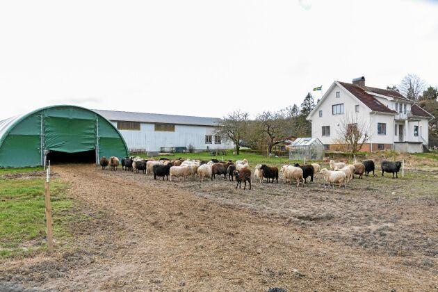 Hamragård har varit i släktens ägo sedan 1900-talets början. Johans och Camillas föräldrar bor fortfarande kvar och hjälper till med det mesta.