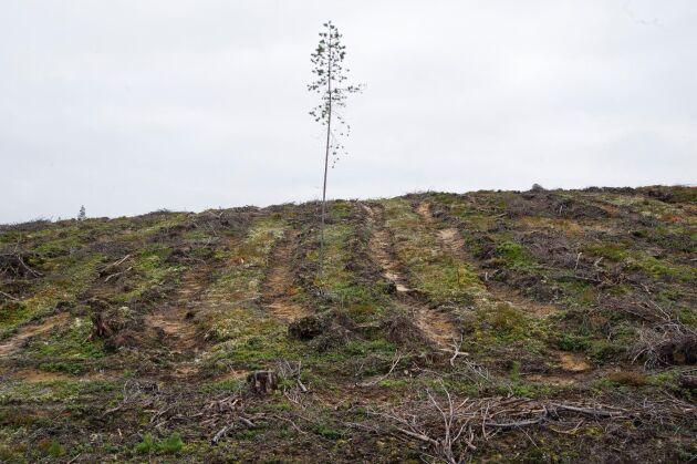 Även om ökningen av avskogningen i världen minskar så oroar sig FN för att den biologiska utarmningen går i en alarmerande hastighet.