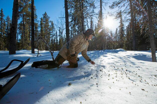 Jenny Viklund är en av landets skickligaste spårare och gillar att följa spåren och se hur av de vilda djuren rör sig i skogen.