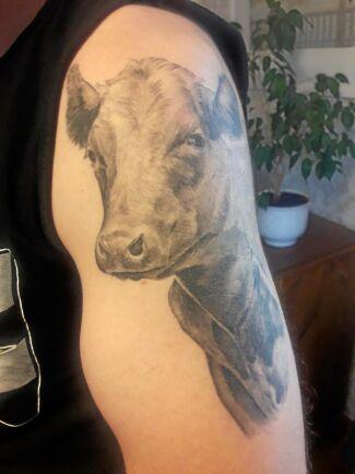 Jonas Andersson lät tatuera en bild av SRB-kon 931 Perla som bor på Öknaskolans Naturbruksgymnasium.