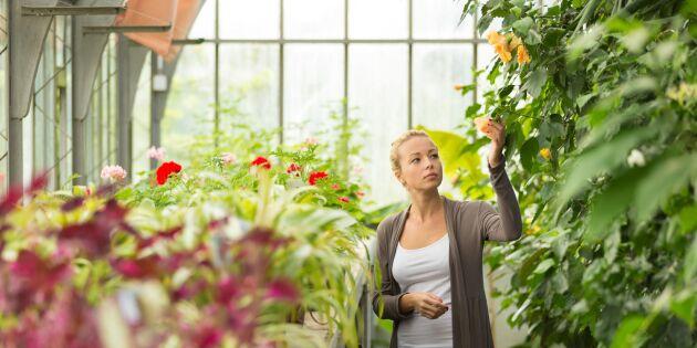 6 goda skäl att starta eget – och så tacklar du svårigheterna